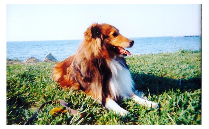 Memories of Maxwell – and All the Dogs of MyLife