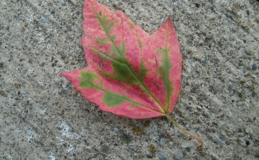 The First Lovely Leaf –Unfortunately