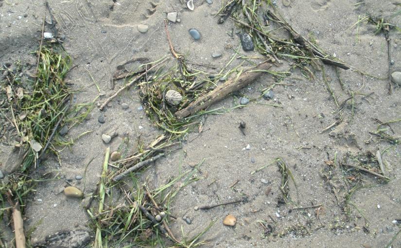 Tide Tossed Treasures –11-2018