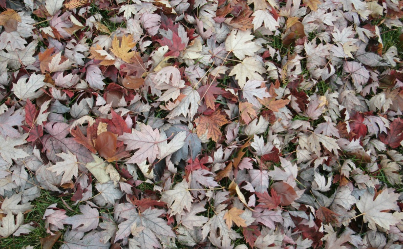 Lovely Leaves Lay Upon theLawn