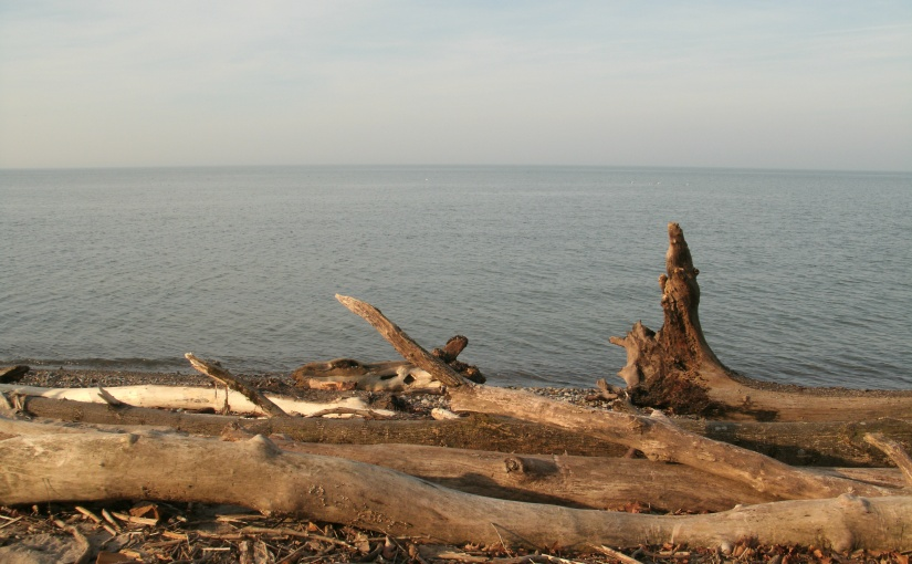 Tide Tossed Trees on a Lake ErieBeach