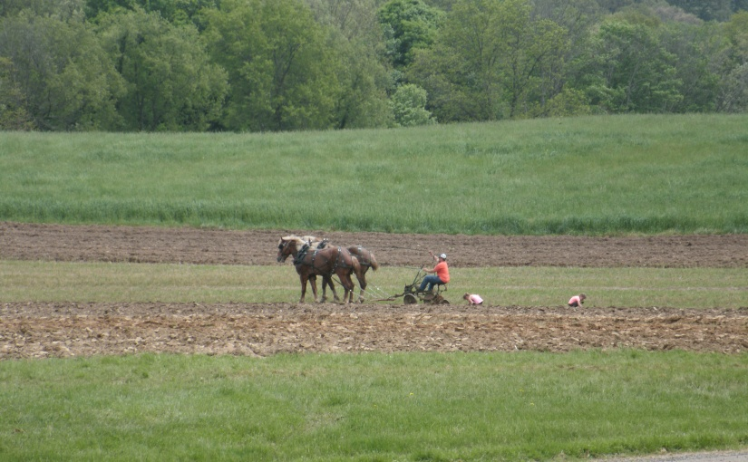 Spring Plowing Days – Work for the Horses – Respite forSpectators