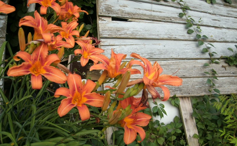 Dreaming of Daylilies and HistoricBuildings