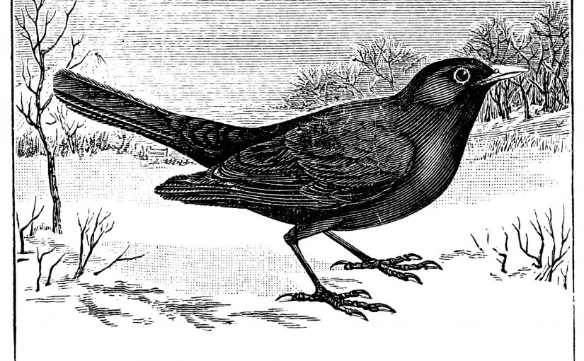 Christmas Trivia – Colly Birds . ..