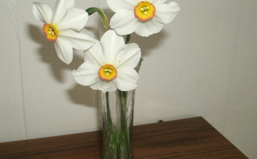 Forgotten Daffodils BringInspiration