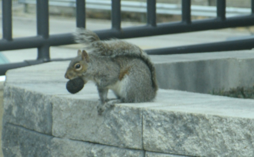 Cute Squirrel Offers Inspiration Amid COVID-19 Crisis