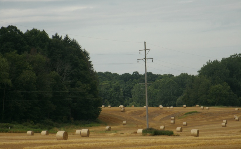 A New Crop of Hay Rounded Into Bales Dots the Landscape of a Local Farm