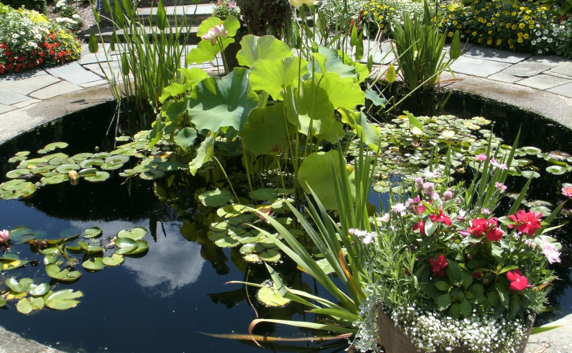 My Favorite Spot – The Lily Pond – Kingwood Center Tour – Photo#4