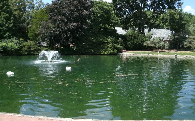 The Duck Pond – Kingwood Center Tour – Photo #5